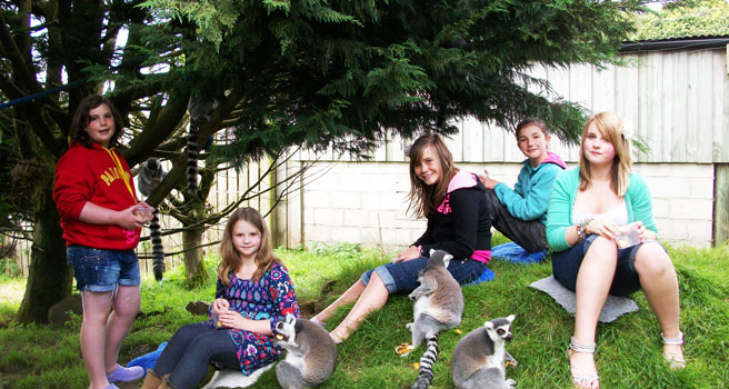 porfell-cornwall-lemurs-tea-party-f